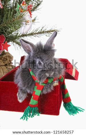Adorable Christmas bunny rabbit under the tree isolated on white background