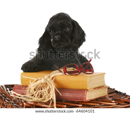 adorable cocker spaniel puppy with books and reading glasses on white background
