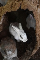 Adorable collection of rabbits playing inside a log.