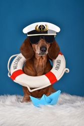 Adorable cute Dachshund dog with a captain hat, sunglasses and life buoy on his neck. On blue studio background