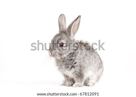 Adorable cute rabbit sit on white background
