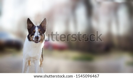 Adorable dog is there in this picture. White dog is looking cute in this picture. Background is blurred.