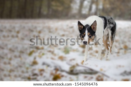Adorable dog is there in this picture. White dog is looking cute in this picture. Background is looking great.