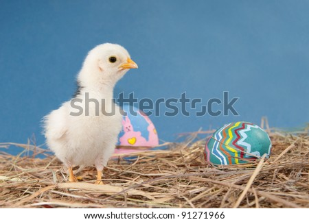 Adorable Easter chick in hay with Easter eggs against textured blue background