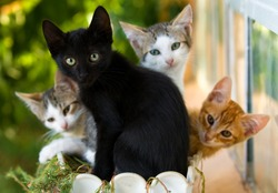 adorable family of colorful kittens in a pot