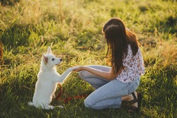 Adorable fluffy puppy giving paw to girl owner and having treat. Woman training cute white puppy to behave  in summer meadow in warm sunset light. Loyal friend