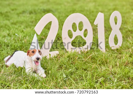 Adorable fox terrier puppy wearing party hat lying near wooden 2018 numbers in the grass at the local park new year seasonal celebration greeting card.  #720792163