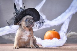 Adorable French Bulldog dog puppy dressed up with large Halloween witch hat in front of seasonal background with cobweb and pumpkin