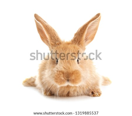 Adorable furry Easter bunny on white background #1319885537