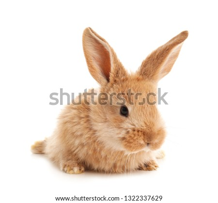 Adorable furry Easter bunny on white background #1322337629