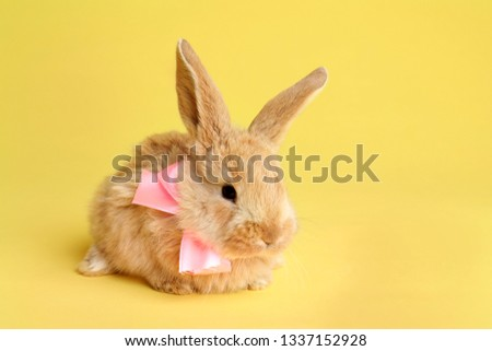 Adorable furry Easter bunny with cute bow tie on color background, space for text #1337152928