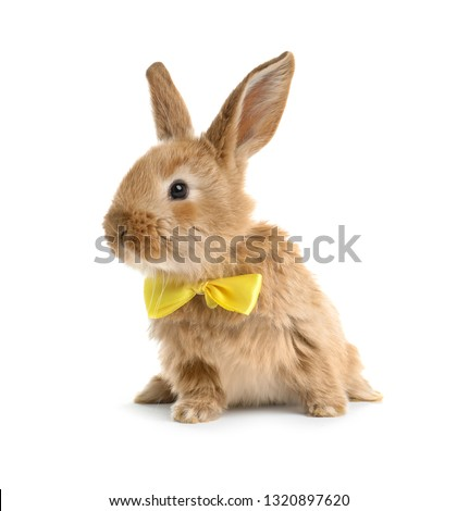 Adorable furry Easter bunny with cute bow tie on white background #1320897620
