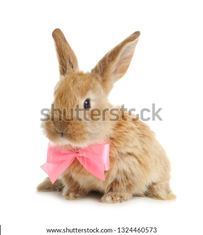 Adorable furry Easter bunny with cute bow tie on white background #1324460573