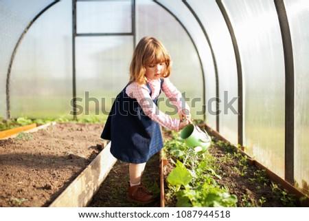 Adorable girl watering seedlings in the greenhouse at cpring, seasonal garden works. Little helper Stock photo ©