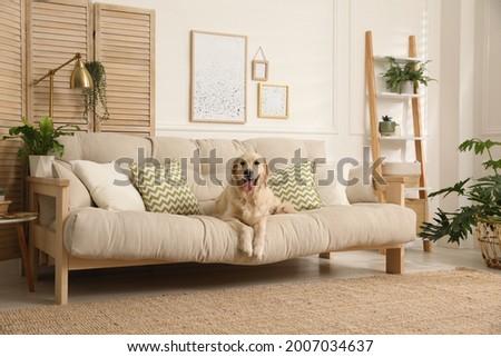 Adorable Golden Retriever dog on sofa in living room