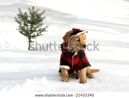 adorable golden retriever puppy in hat and coat sitting on snow near small tree