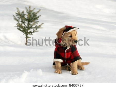 adorable golden retriever puppy in plaid hat and coat sitting on snow near small tree