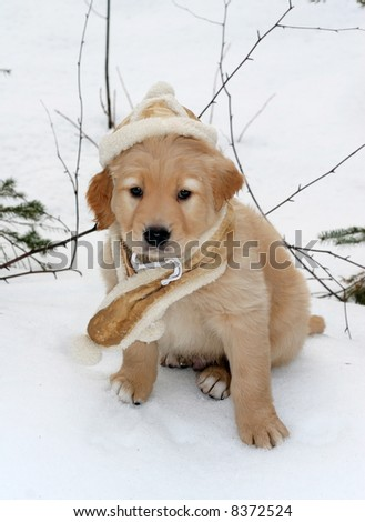 adorable golden retriever puppy in suede hat and scarf sitting on snow