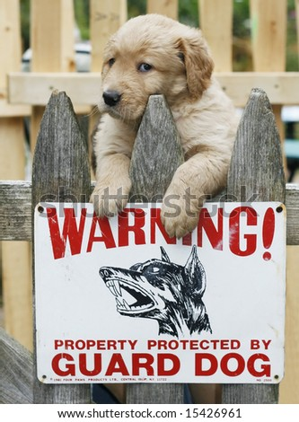 "adorable golden retriever puppy on fence with sign ""warning...property protected by guard dog"""