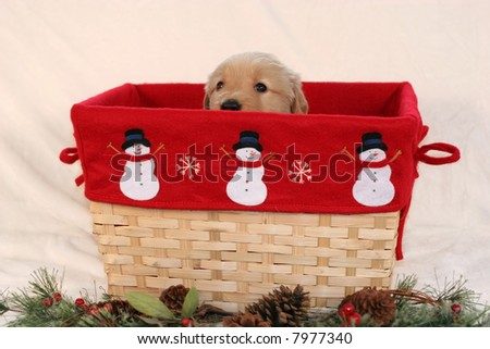 adorable golden retriever puppy peeking over side of holiday basket