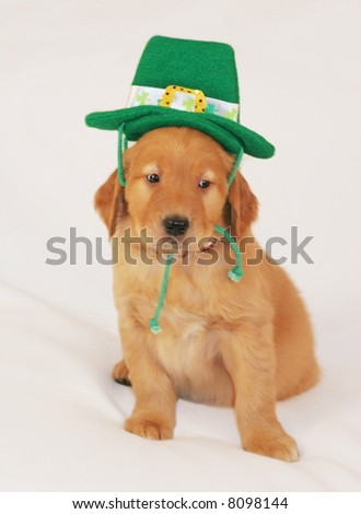 adorable golden retriever puppy with st patrick's day hat