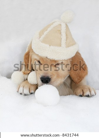 adorable golden retriever puppy with suede hat sitting in hole in snow with snowball