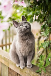 Adorable Gray Cat Sitting Outside on Deck