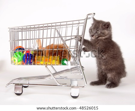 Adorable gray kitten pushing a shopping cart filled with toys