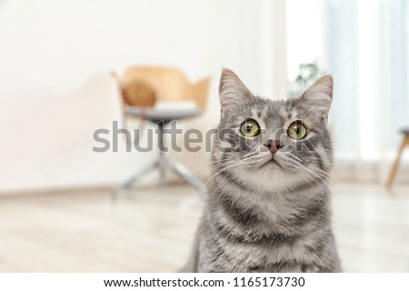 Adorable grey tabby cat on blurred background #1165173730