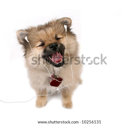 Adorable Happy Puppy Listening to MP3 Music Player Headphones