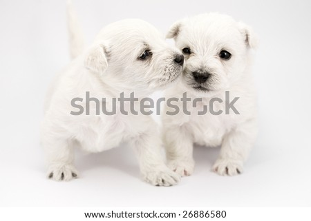Adorable kissing puppies, only a few weeks old