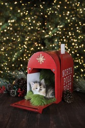 Adorable Kitten in a Holiday Christmas Mailbox.jpg