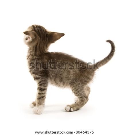 Adorable kitten isolated on white
