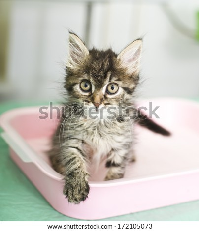 Adorable kitten sitting in cat toilet