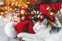 Adorable kitten sleeping on cozy santa hat with red and gold baubles in festive box with warm illumination lights. Atmospheric winter moments. Merry Christmas and Happy Holidays!