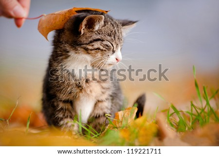 adorable kitten under an autumn leaf