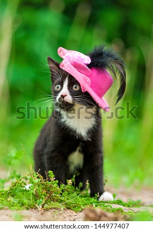 Adorable kitten with pink hat