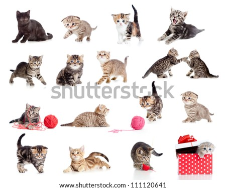 Adorable kittens collection. Little funny cats isolated on white. - stock photo