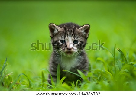 adorable little baby kitty
