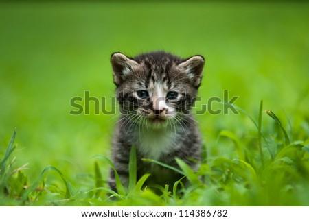 adorable little baby kitty - stock photo