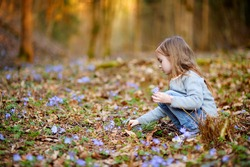 Adorable little girl picking the first flowers of spring