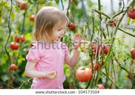 Adorable little girl picking tomatoes in a garden