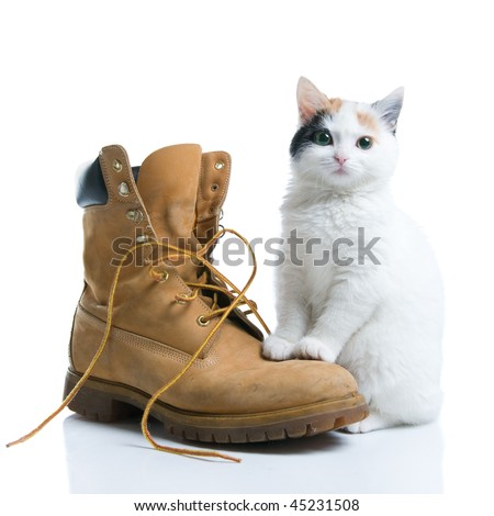Adorable little kitten standing near a boot isolated on white background