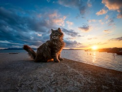 Adorable long haired tabby cat enjoying sunset on a windy day. Wonderful sunset seen from the lagoon with a stray cat relaxed on the quay. Cute cat with fisherman boats in the background.
