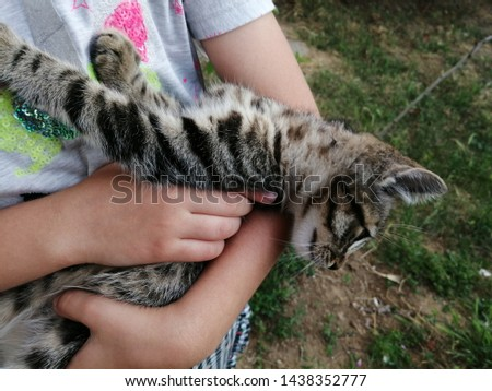 adorable meowing tabby kitten outdoors #1438352777