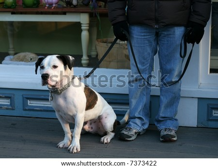 adorable mixed breed dog standing next to owner