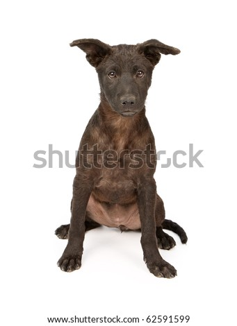 Adorable mixed breed puppy with a black coat. Isolated on white.