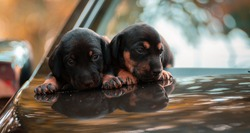 Adorable newborn baby sausage dog puppies in car hood together, sharing the warmth of the bodies, innocent faces looking at the camera, natural light portraiture of two weeks old, two dog babies.