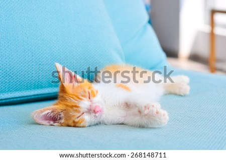 Adorable orange baby cat sleeping on a blue sofa in office. Adopting a pet and love for animals concept.