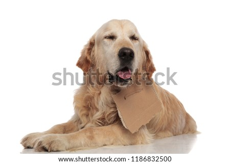 adorable panting labrador with carton sign around neck lying on white background #1186832500